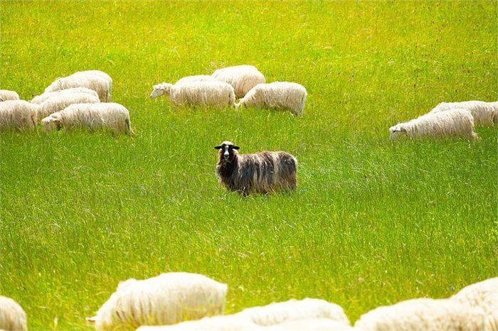 תסמונת הכבשה השחורה במשפחה: למה זה קורה?