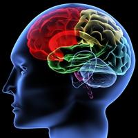 פסיכולוגים חברתיים-תעסוקתיים-ארגוניים מדריכים
