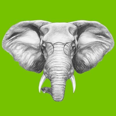 למשש את הפיל: על נקודות עיוורון וכישלונות טיפוליים